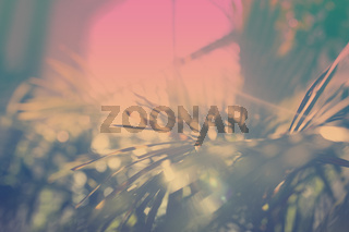 Green palm leaves with bokeh photo effect and inverted colors
