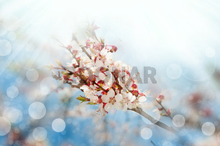 Blossoming branches tree with sun light