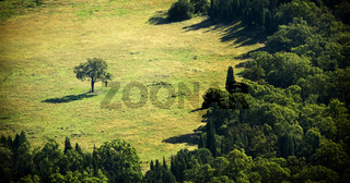Separate Tree
