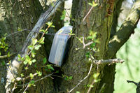 found geocaching hiding place with a cache in a box in a tree in the Herrenkrugpark near Magdeburg