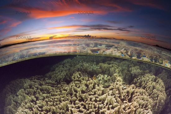Korallenriff, Papua Neuguinea