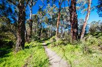 Plenty Gorge Parklands in Australia