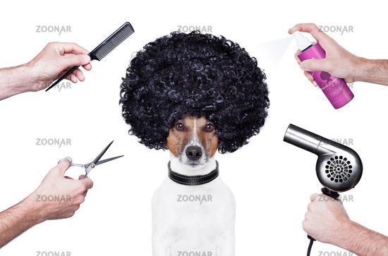 hairdresser  scissors comb dog spray