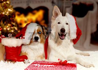 Hunde an Weihnachten