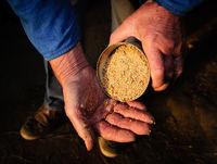 old man hands farmer feed