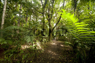Wanderweg durch den Regenwald im Nationalpark Vulkan Arenal beim Ort La Fortuna