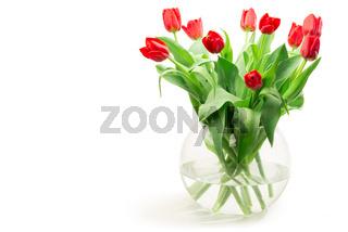 Rote Tulpen freigestellt