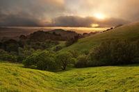 Foggy California Meadow Sunset