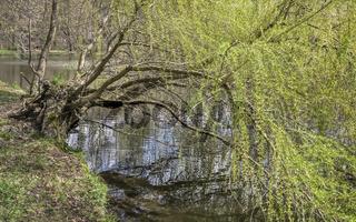 Der Baum am Teich