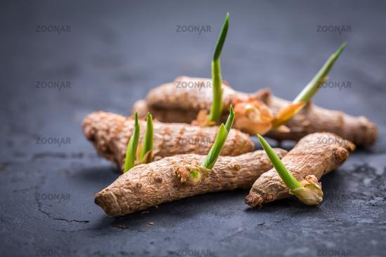 Curcuma (turmeric root) with fresh rhizomes