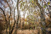 Autumn deciduous forest. City Park. Stavropol. Caucasus.