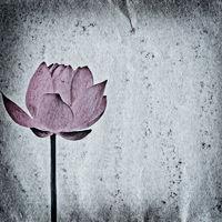 lotus flower old grunge paper texture