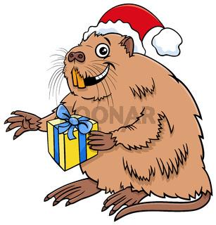 cartoon coypu animal character with gift on Christmas time