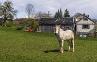 A horse on the pasture in front of the village