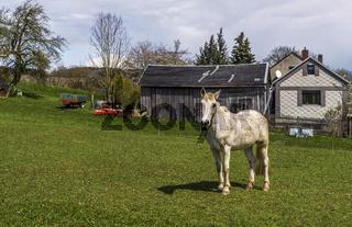 Ein Pferd auf der Weide vor dem Dorf