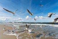 Flock of seagulls on beach flying