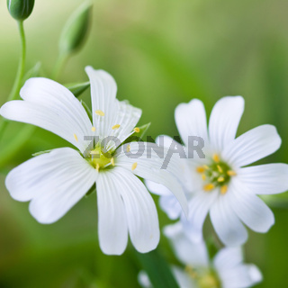 close-up white flowers