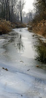 partly frozen water course in the riparian forest