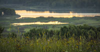 Blooming field grasses on a hill a at morning dawn