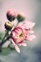 Blumen mit ihren zarten Blüten im Frühling.