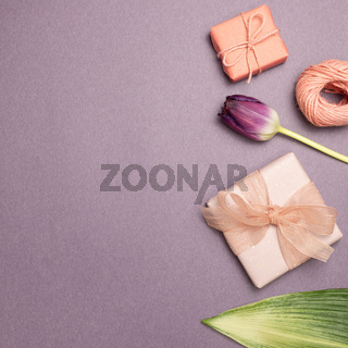 Pink gift boxes, string, purple tulip flower on purple background. flat lay, top view, copy space