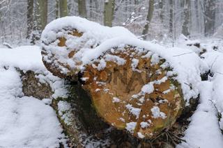 Baumstämme im verschneiten Wald