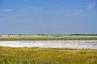 Hutweiden mit Salzausblühungen in der Bewahrungszone der Langen Lacke
