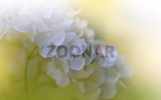 Beautiful Nature Background.Floral Art Design.Abstract Macro Photography.Colorful Flower.