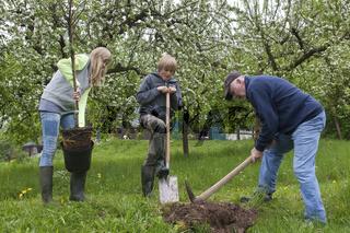 Apfelbaum-pflanzen