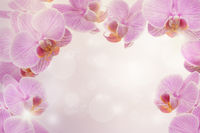 Pink orchid flowers at a pink background with bokeh and bright light