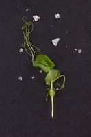 Microgreens. Tiny pea leaf on black background. Top view.