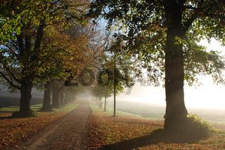 Baumallee im Herbst und Gegenlicht