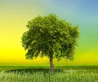 Nature Background Eco Concept