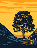 Sycamore Gap Tree in Hadrian's Wall Country Within Northumberland National Park in North East England UK Art Deco WPA Poster Art