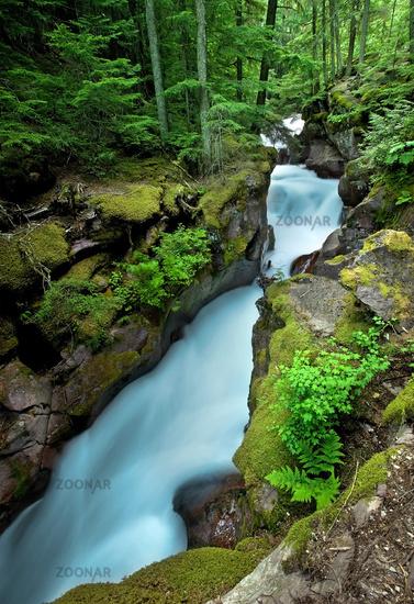 Raging Forest Creek