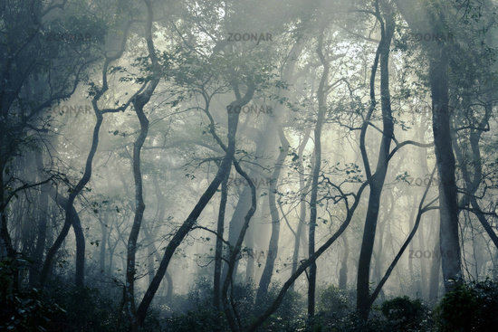Foggy forest with mysterious atmosphere