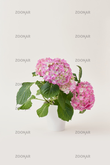Pink and white flowers in vase