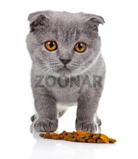Little kitten eating pet food isolated on white