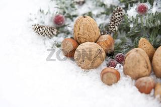 Blautanne mit Schnee und Nüssen