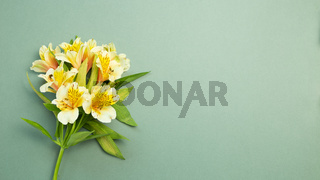Yellow Alstroemeria flowers bouquet on green background. flat lay, top view, copy space