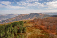 Drone aerial landscape view of pine trees and mountains during Fall in Mondim de Basto, Portugal