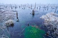 German bog in winter