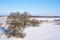 Landscape with trees on the bank of the river Elbe near the village Glindenberg in Winter
