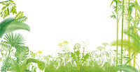 green grasses, plants and bamboo isolated on white, illustration