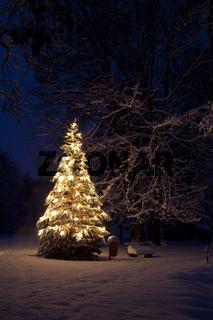 Weihnachtsbaum im Schnee / Winter
