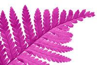 pink ivy leaf