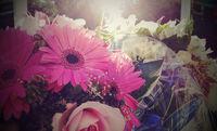 Beautiful flowers, sunlight, joyful