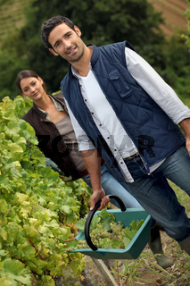 Couple working in a vineyard
