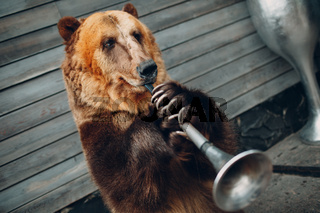 Brown Bear plays trumpet.