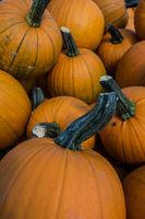 Cucurbit Pumpkins Cucurbita